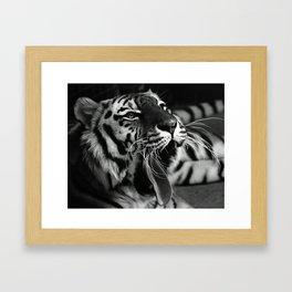 Sleepy Tiger Framed Art Print