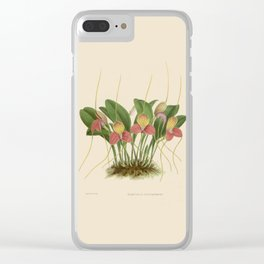 File:R. Warner & B.S. Williams - The Orchid Album - vol 01 - plate 005 Clear iPhone Case