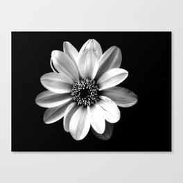 A little Shady Canvas Print