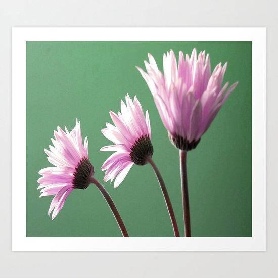 Rose  Gerbera Daisy Art Print