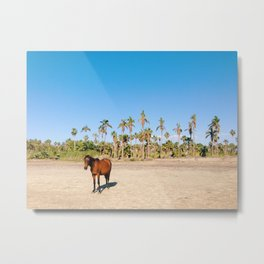 Wild horse on a beach with palm trees Metal Print