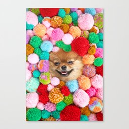 Pomeranian in the Poms Canvas Print