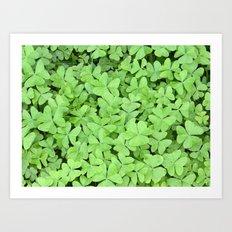 Green Clovers Art Print