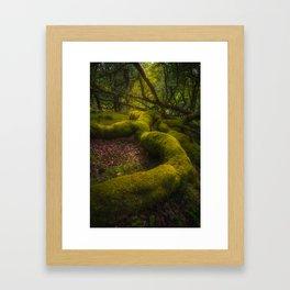 Magical forest - Ireland (RR237) Framed Art Print