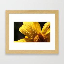Nature's Gold Framed Art Print