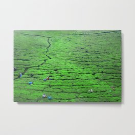Tea plantations, Sri Lanka Metal Print