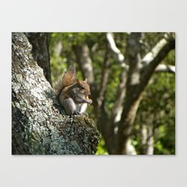 My furry friend Canvas Print
