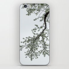 spring bloom reflected in loft window iPhone & iPod Skin