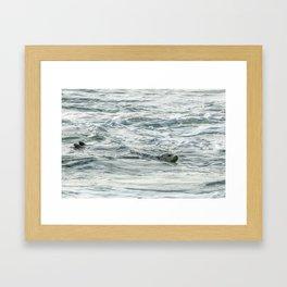 Harbor Seal, No. 2 Framed Art Print