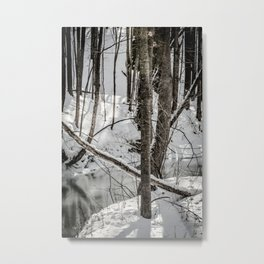 Winter Woods & Creek Metal Print