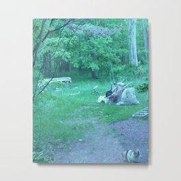 life on earth in the backyard #101 Metal Print