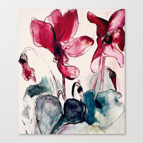 Alpenveilchen Canvas Print