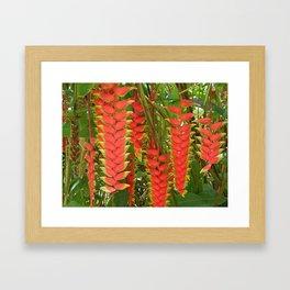 Maui Heliconia Framed Art Print