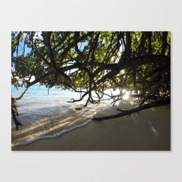 Amongst The Mangroves Canvas Print