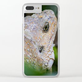 Iguana - Reptile Photography Clear iPhone Case