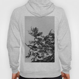 Palm tree leafs in the wind | Black and white botanical nature photography Hoody