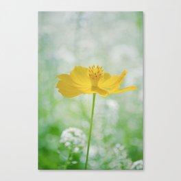 Yellow Bloom Canvas Print