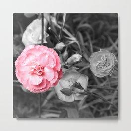 Single Pink Carnation Metal Print
