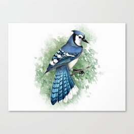 Blue Jay In Watercolor Canvas Print