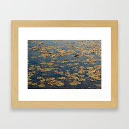 Lily Pads Framed Art Print