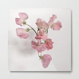 Sweet Pea Flower with Pink Petals Metal Print