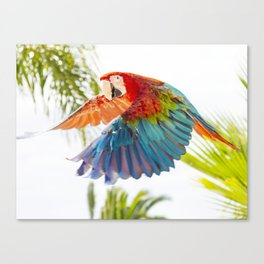 Colorful macaw flying Canvas Print