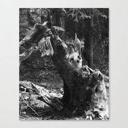 Vulnerable II Canvas Print
