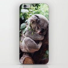 Cute Koala relaxing in a Tree iPhone & iPod Skin