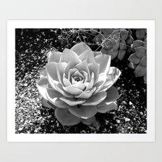 Sand Flower Art Print
