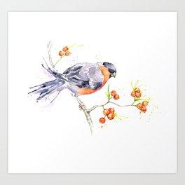 British Birds 2012 Series - Bullfinch Art Print