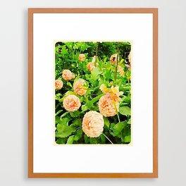 Peaches and Cream Dahlias Framed Art Print