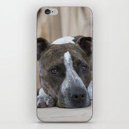 Pittbull Love iPhone Skin
