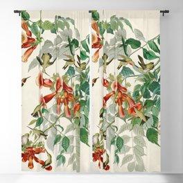 Ruby throated Humming Bird - Audubon's Print Blackout Curtain