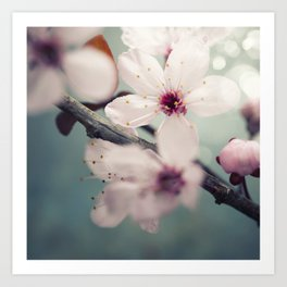 Spring blossom on rustic wooden table Art Print