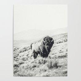 Nomad Buffalo Poster