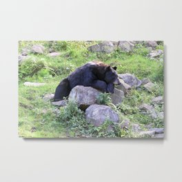 Contemplative Black Bear Metal Print