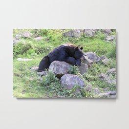Contemplative Black Bear Metal Print