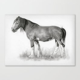 Draft Horse in Pencil Canvas Print