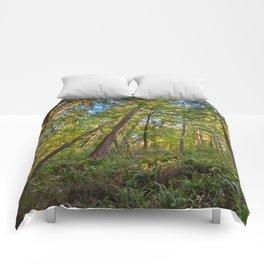 Muir Woods Comforters