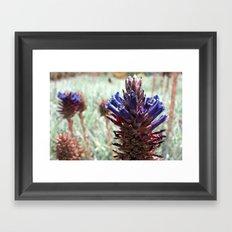 Purple  Flower  Spikes Framed Art Print