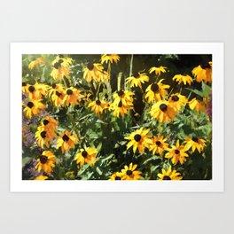 Black-eyed Susan Yellow Flowers Art Print