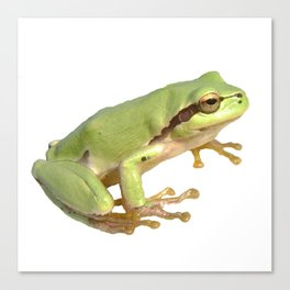 European Tree Frog Canvas Print