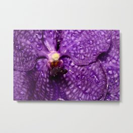Macro Purple Orchid Metal Print