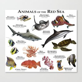Animals of the Red Sea Canvas Print