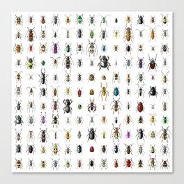 Beetlemania / Get your entomology on! Canvas Print