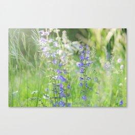 meadow sage Canvas Print