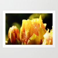 Raindrop Cactus Flower Art Print