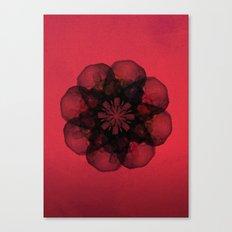 Lilium 'Cameo' Canvas Print