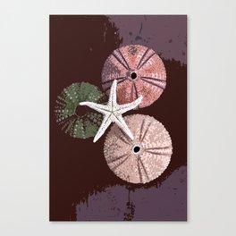 seashell 6 Canvas Print