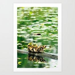 Duckling Family Art Print